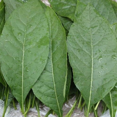 Bitter Leaf has amazing healing benefits